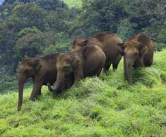 Honeymoon Tour To Thrissur
