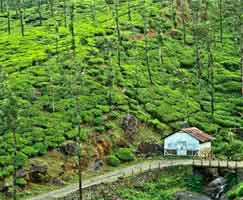 Tour Package Thrissur